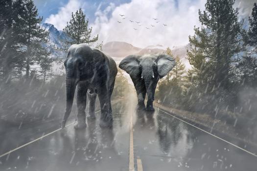 elephant-1736449_1920